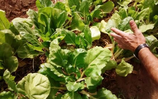 La Huerta en zonas áridas y semiáridas