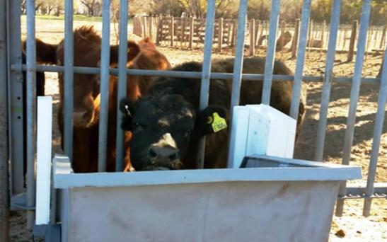 Tecnología digital aplicada a la ganadería pampeana