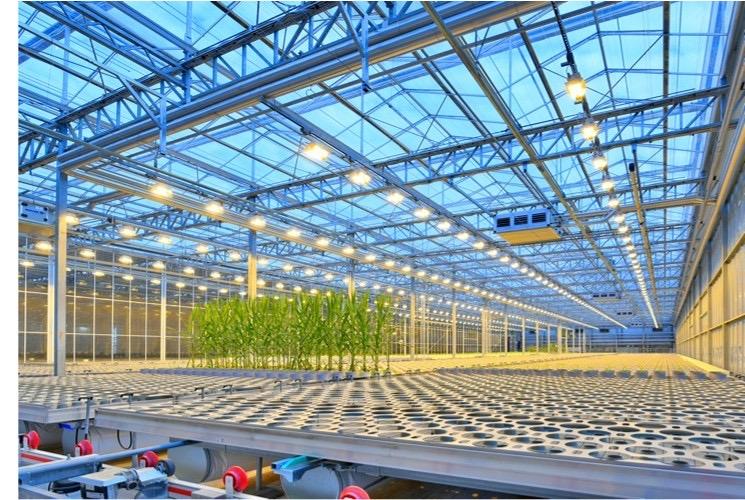 Bayer: Bio revolución en semillas
